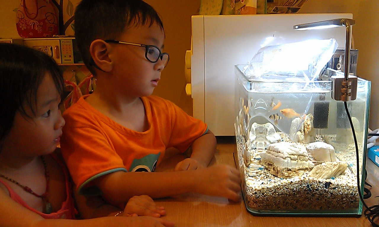 魚缸換新魚(四間魚)、佈景