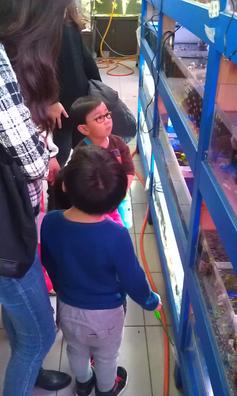 土城水族館 地中海水族量販(已歇業轉手經營)