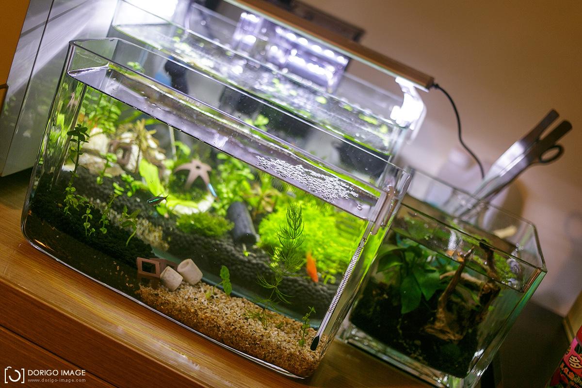 無CO2一呎水草缸造景二(全記錄)