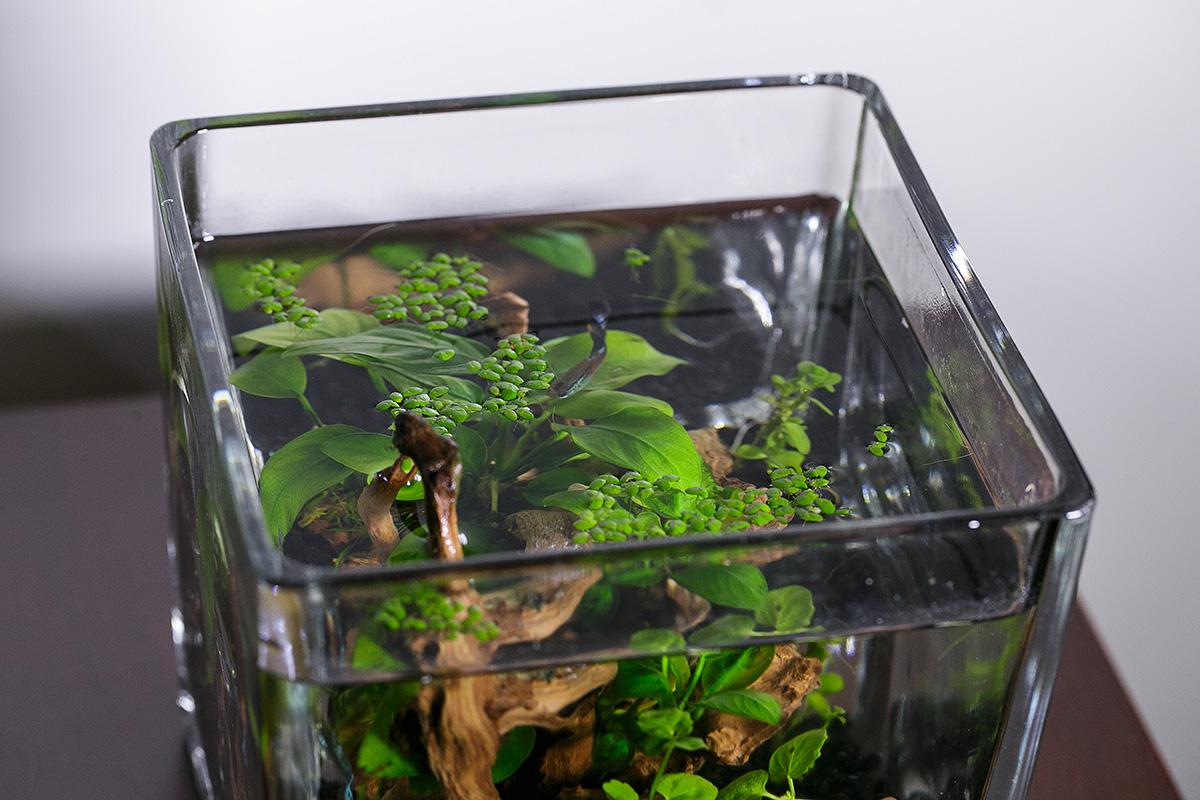 15公分立方水草缸寫真
