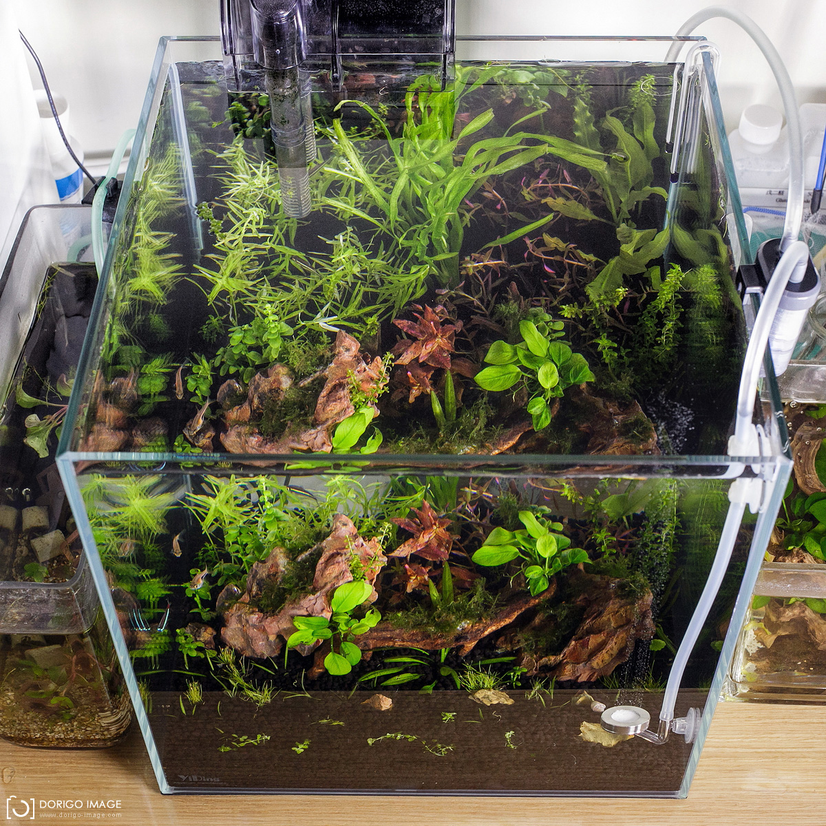 CO2一呎30立方水草缸造景三