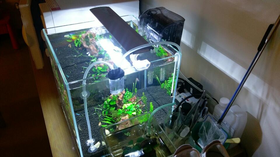 養好水草不可缺的CO2設備大公開及安裝教學