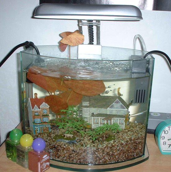 我的第一個水族缸