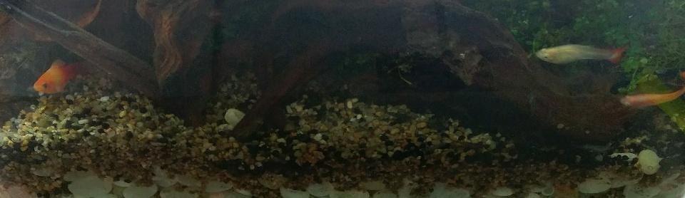 我的第一個後陽台水陸生態缸