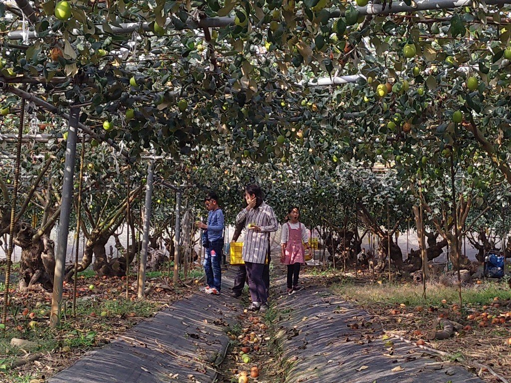 2021新年 Happy牛Year 宜蘭台南